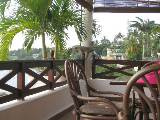 Tamarind Village Apartments: Out on your veranda