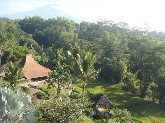Padi City Resort: View halaman belakang: sawah dan gunung Arjuna