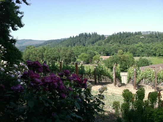 Wine Country Inn & Cottages: View from our Room