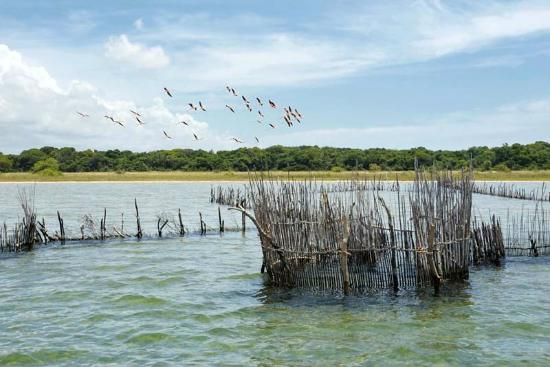 Extreme Nature Tours and Travel Day Tours: flamingos at kosi bay