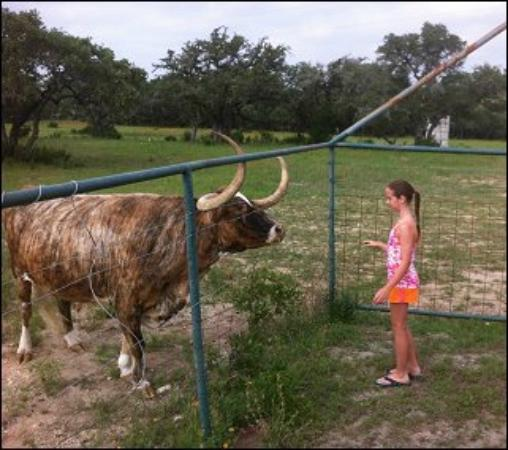 ‪‪Canyon Lake Ranch‬: feeding one of the Longhorn cows‬