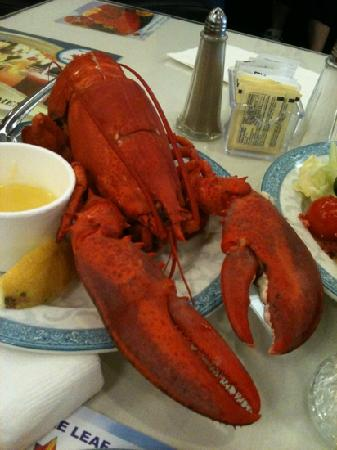 Maple Leaf Queen's Buffet : lobster special