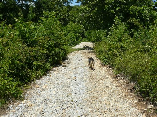 The owner's friendly dog on the gravel road to Shady River Getaway