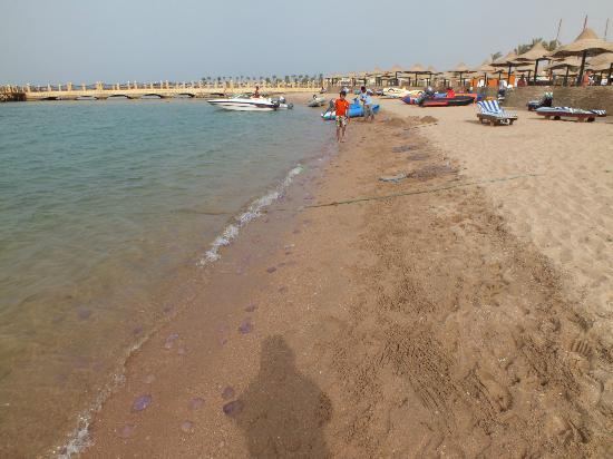 SUNRISE Garden Beach Resort -Select- : Beach - plague of jelly fish