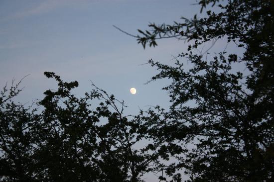 Vesterlyng Camping: Moonlight