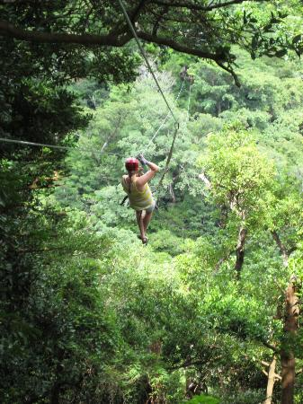 Buena Vista Lodge & Adventure: Super high ziplines in the canopy!