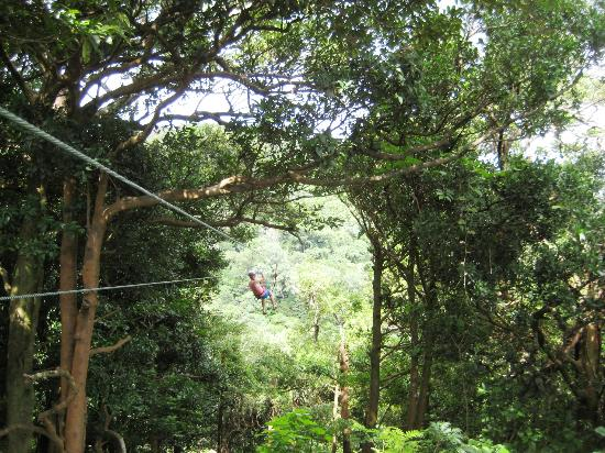 Buena Vista Lodge & Adventure: Huge ziplines, super long and fast!