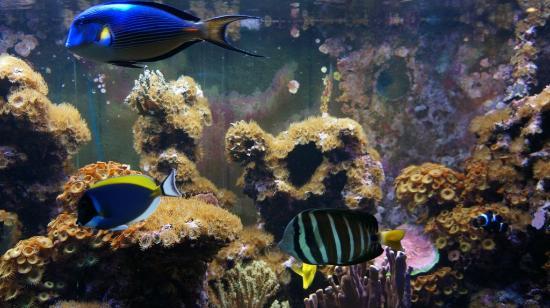 Johnny Famous: Fish tank