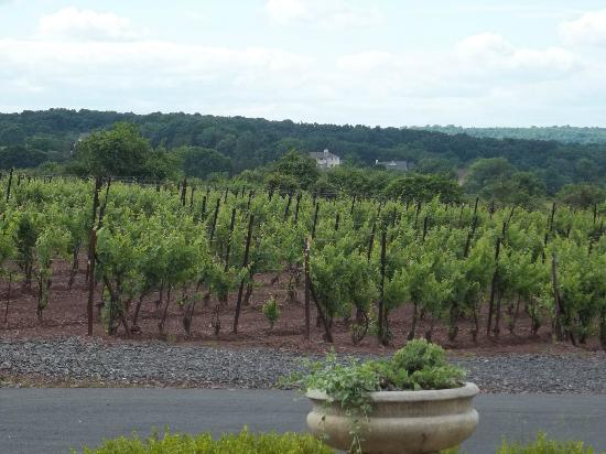 Tastings and Tours: Bucks County: View from Sand Castle Winery III