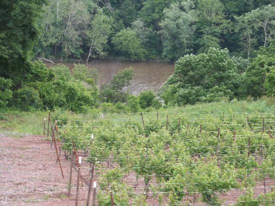 Tastings and Tours: Bucks County: View from Sand Castle Winery II