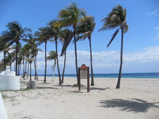 Fort Lauderdale Beach: palmeras
