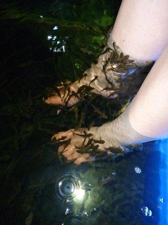 Carla Spa: The fish loved my friend's feet!