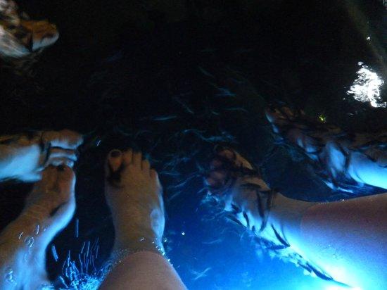 Carla Spa: Fish foot spa