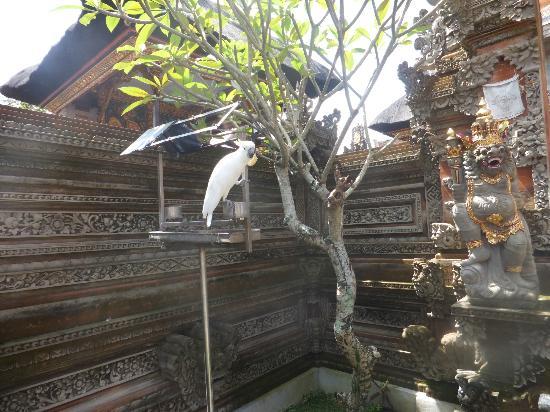 Pondok Pundi Village Inn & Spa: Bird within hotel compound