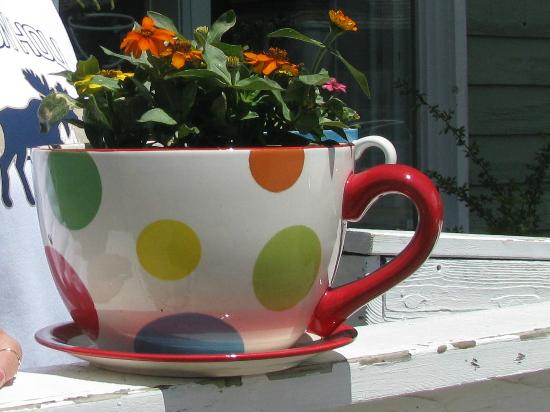 Jackson Hole Roasters - Restaurant & Coffeehouse: Coffee Cup Flower Pot