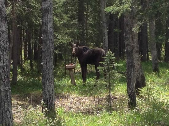 Deer Valley Bed & Breakfast: A close encounter with Wildlife, from my balcony.