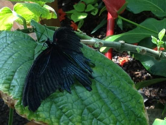 how to look after a butterfly house