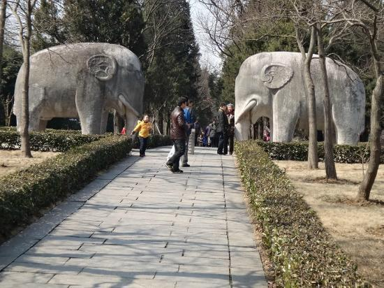 Purple Mountain (Zijin Shan): Stone Elephant Road near Xiaoling Tomb