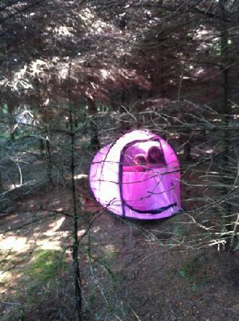Riverhaven Log Cabins: kids camping in our very own forest !!