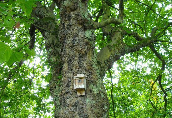 Botanic Gardens and Kibble Palace - Tree 2