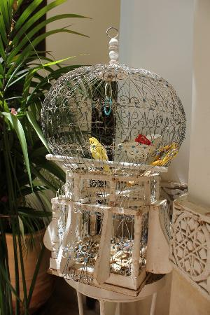 Riad Hayati: Beautiful birdcage