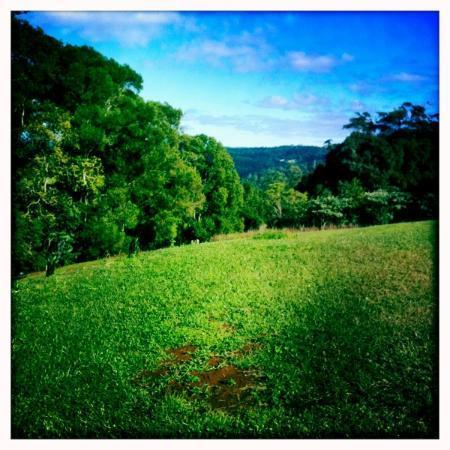 Avocado Grove B&B: The amazing view!