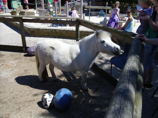Battersea Park Children's Zoo: petting