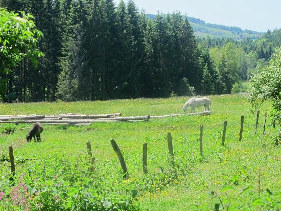Chalets de la Vigotte : une des vues de notre chalet