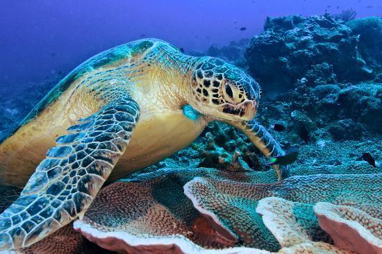 Maratua Paradise Resort: underwater