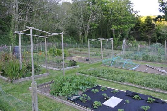 Fabulous kitchen garden at Cove Cottage