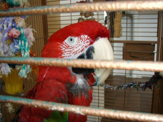 dillion the macaw in his cage picture of quality inn oceanfront rh tripadvisor com