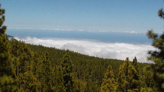 Orotava Valley: Blick hinunter ins Tal