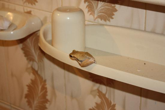 Saubagya Inn : Complimentary Frog