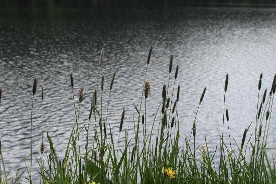 Lake of Staz (Lej da Staz): uno scorcio