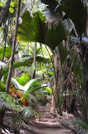 Vallee de Mai Nature Reserve: Weg durch den Park