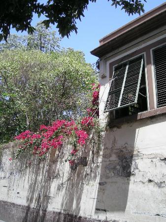 Apartamentos São Paulo e Alegria : Rúa da Carreira poco antes de llegar a los apartamentos Sao Paulo