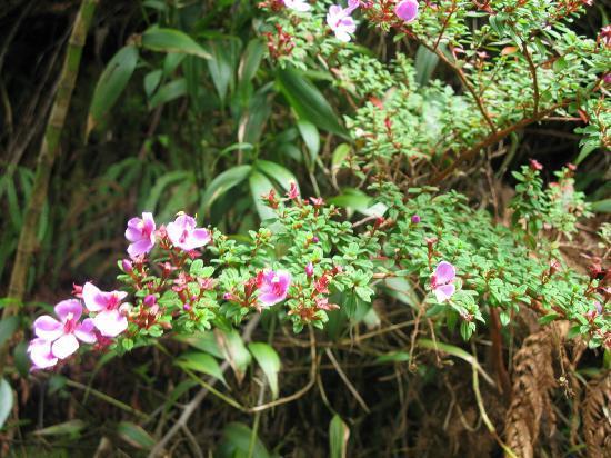 Poas Volcano: Orchid
