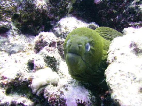 Tahaa Diving : Moray eel