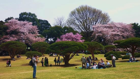 Shinjuku Gyoen National Garden: .