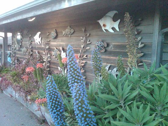 Surf Motel: Beautiful plants to greet guests