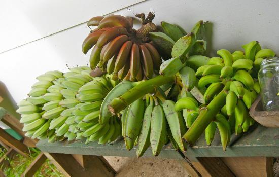 Tauono's: A variety of Bananas