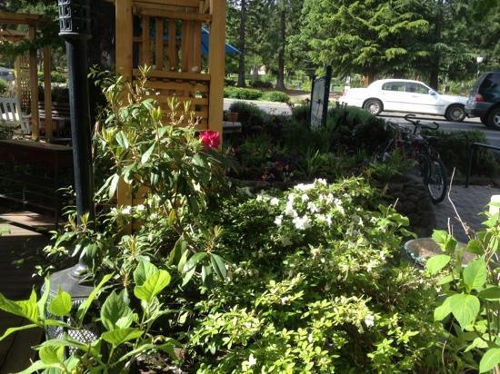 Morning Glory Restaurant : front garden