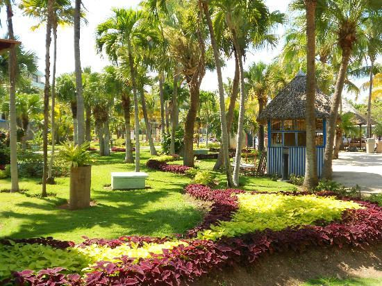 Jardines fotograf a de sol palmeras varadero tripadvisor - Imagenes de jardines con palmeras ...