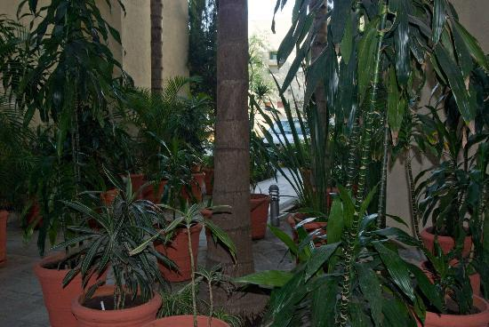 Aurea Hotel and Suites: Plants Right Outside Room 211