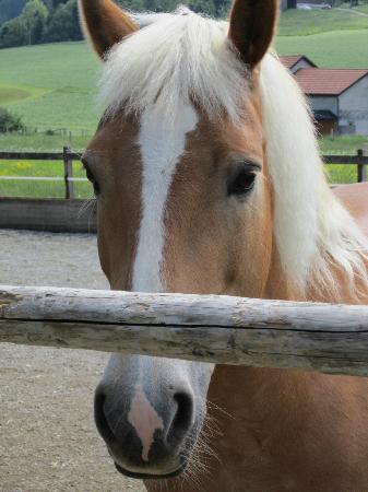 Bären - Das Gästehaus: Le cheval de la patronne