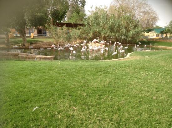 Riyadh Zoo: طيور