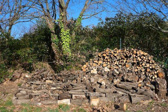 Les Oliviers & Les Cerisiers: Garden scene