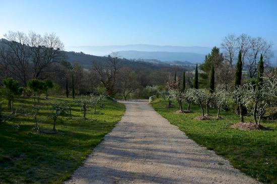 Les Oliviers & Les Cerisiers: Garden drive way