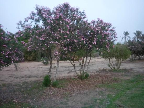 Swiss Inn Nile Hotel: The blossom in full bloom around the golf course