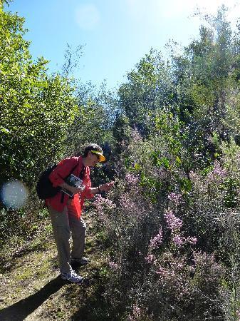 Pledge Nature Reserve: Pledge Plant identification